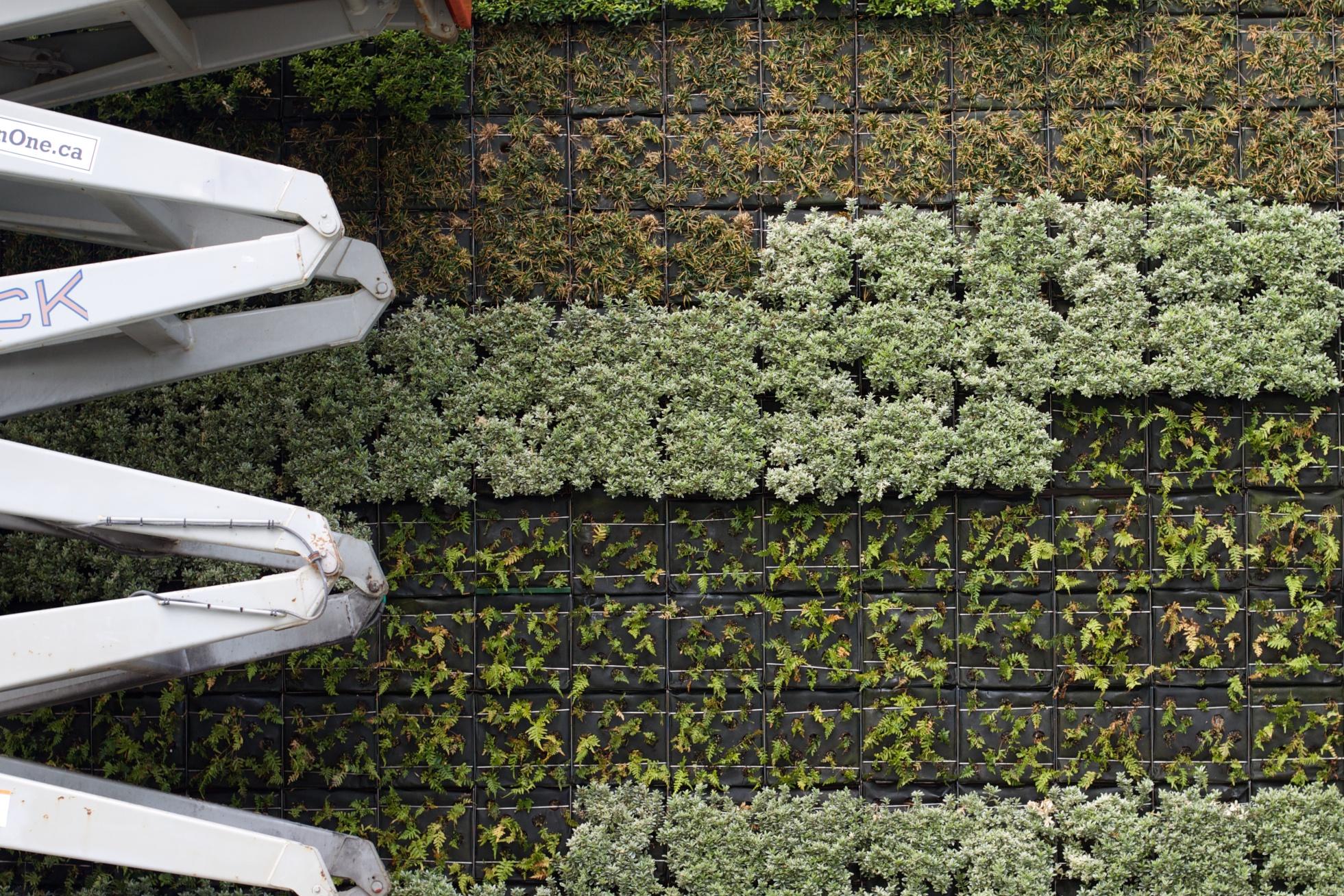 Jardin vertical d 39 int rieur quelles plantes choisir guide jardins et paysages - Jardin vertical interieur ...