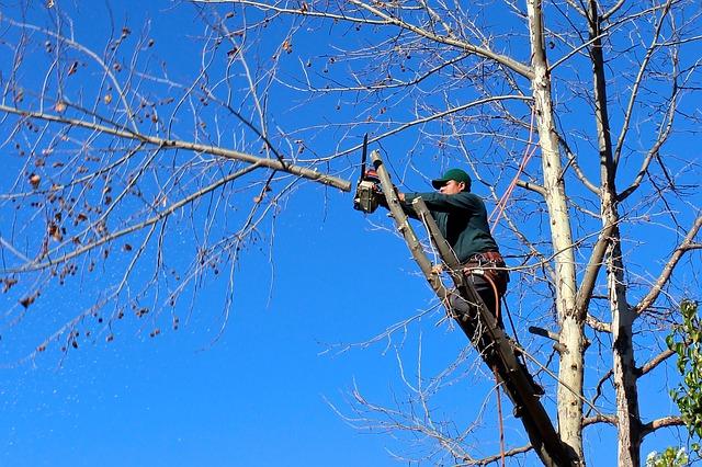 aménagement paysager et l'abattage d'arbres
