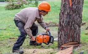 abattge d'arbres