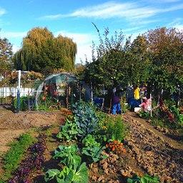 entretien jardin potager