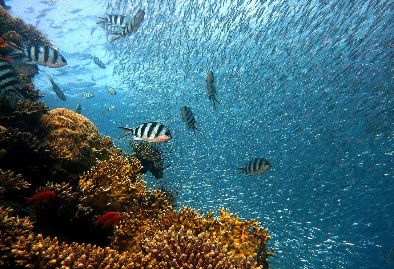création de bassin aquatique