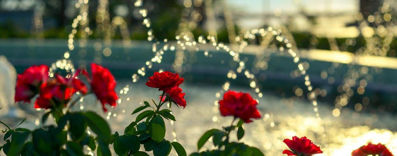 eclairer-son-jardin