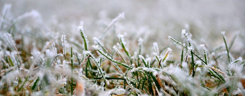 preparer-votre-pelouse-pour-hiver